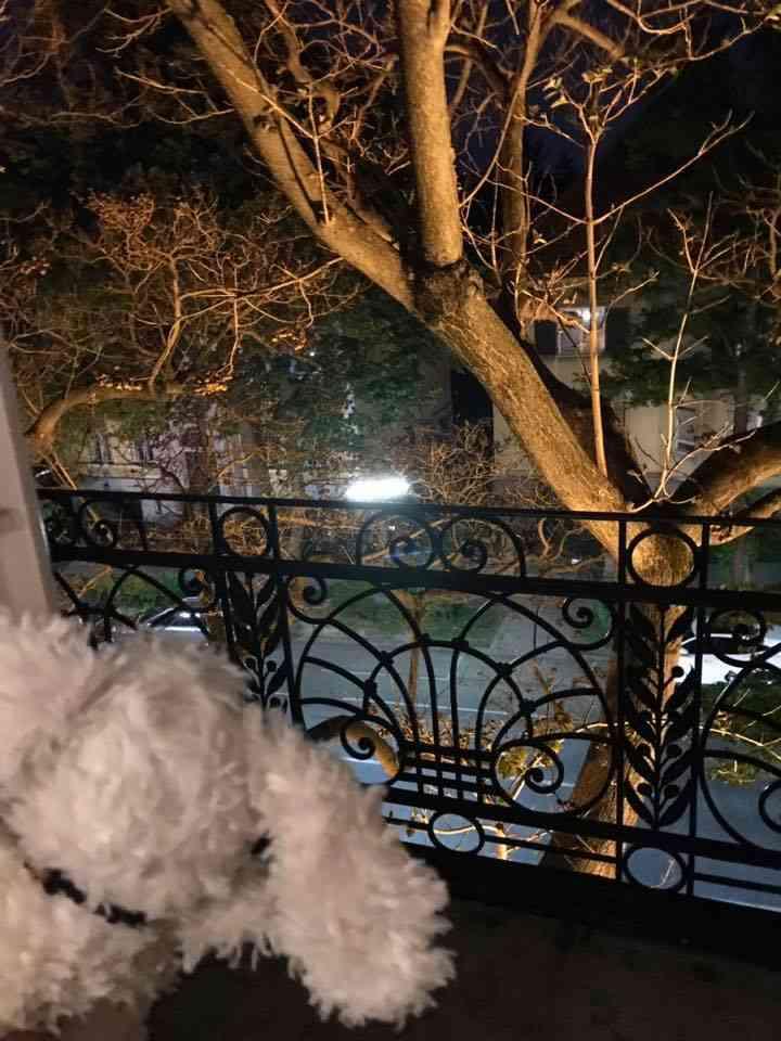 Balkon mit Blick auf die Straße Hotel Park Villa Wien